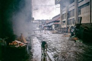 σκύλος περπατάει στους βρόμκους δρόμους αγοράς