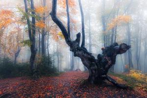 φωτογραφία τοπίου, φθινοπωρινό τοπίο